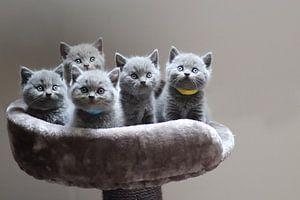 schattige kittens bij elkaar in een mandje van Eline Sijtsma