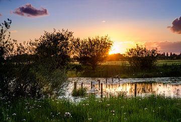 Zomeravond aan het water met bloeiende zwanenbloemen van LiemersLandschap