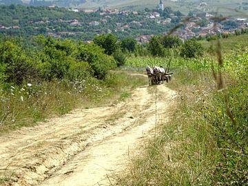 Paard en wagen op de zandweg von Wilma Rigo