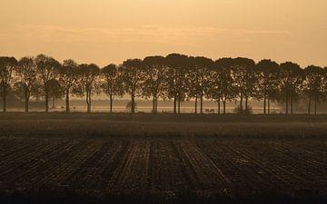 Baumreihe morgens in Die Niederlanden von Wouter Bos