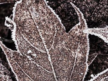 Bevroren esdoornblad van Katrin May