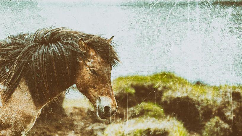 Rispað 4 von Islandpferde  | IJslandse paarden | Icelandic horses