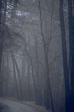 Mysteriöse Linien in einem nebligen Wald von Mischa Corsius