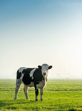 Koe in weiland von Ruurd Dankloff