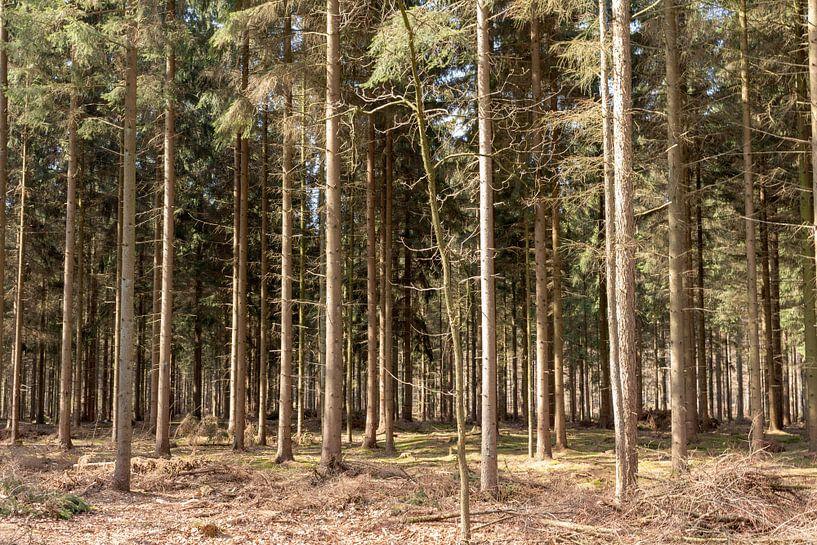 Rechte bomen op een rij in Lage Vuursche van Jaap Mulder