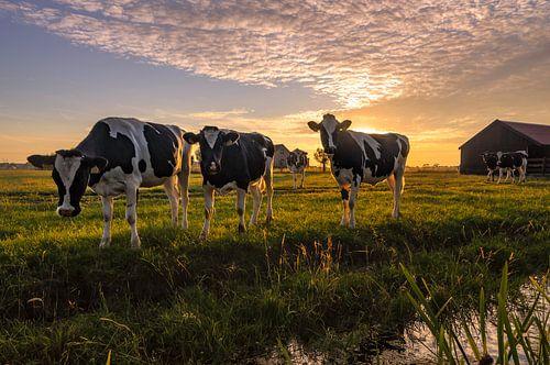 Niewsgierige koeien op een warme zomeravond van Martijn van der Nat