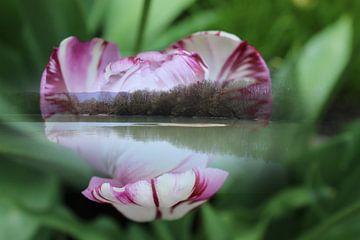 See in Tulpe (Lake in Tulip) von Margit Färber