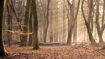 Sonnenstrahlen im Speulderbos von E Blaas