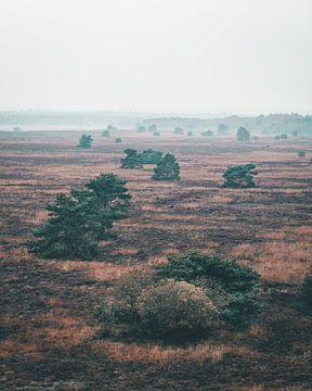 Bomen op een mistige vlakte op de Veluwe van Mick van Hesteren