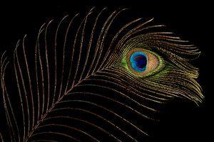 Pauwenveer (1) van