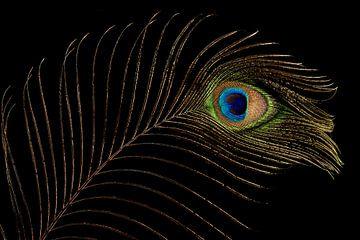 Peacock feather (1) sur Mayra Pama-Luiten
