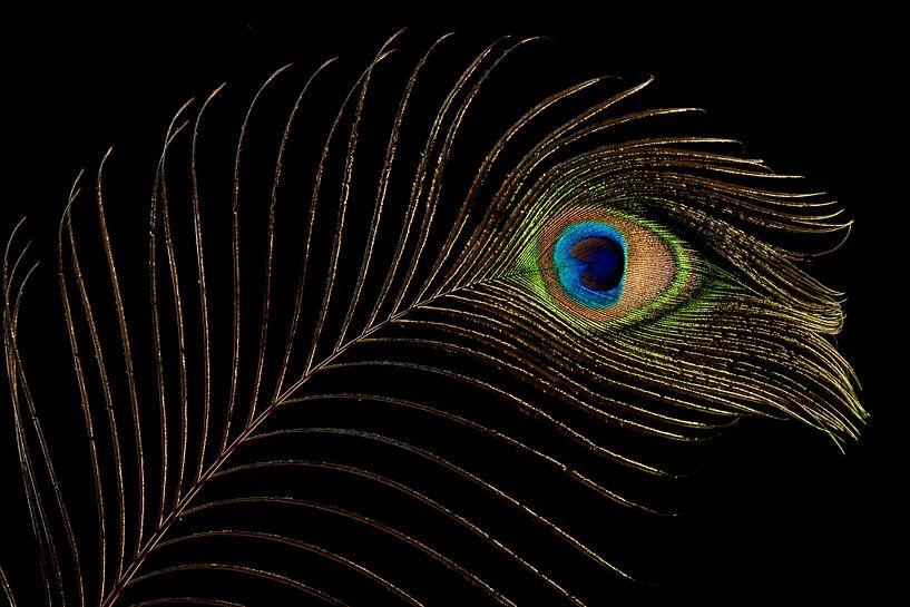 Pauwenveer (1) van Mayra Pama-Luiten