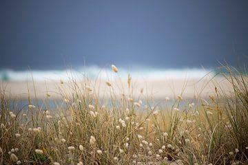 Typisch Nieuw Zeelands landschap van Michaelangelo Pix