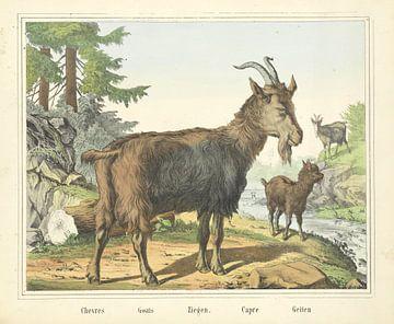 Geiten, Firma Joseph Scholz, 1829 - 1880