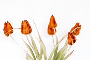 tulpen van Michael Schulz-Dostal