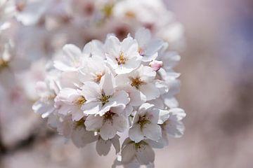 Close-up van bloesem in de lente van Evelien Oerlemans