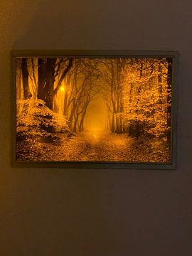 Klantfoto: De rand van de herfst