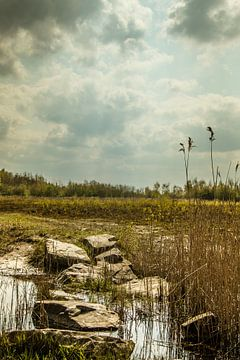 Nederlands landschap. van Anjo ten Kate