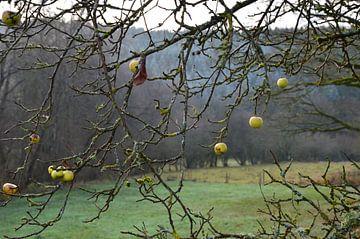 Die letzten Äpfel im November von Susanne Seidel