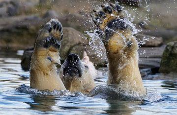 Eisbär spielen'. von Tanja Otten Fotografie