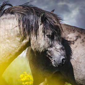 Wild konikspaard van Sharon Zwart