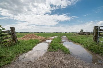 Hekwerk in poldergebied Alblasserwaard van Beeldbank Alblasserwaard