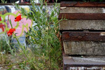 Old rusty stairs with poppies van Sanneke van den Berg