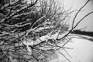 Takken in de sneeuw in zwart wit