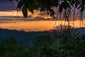 Jungle window van Jonathan Krijgsman