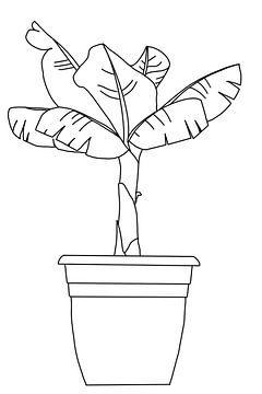 Bananenpflanze schwarz-weiß von MishMash van Heukelom