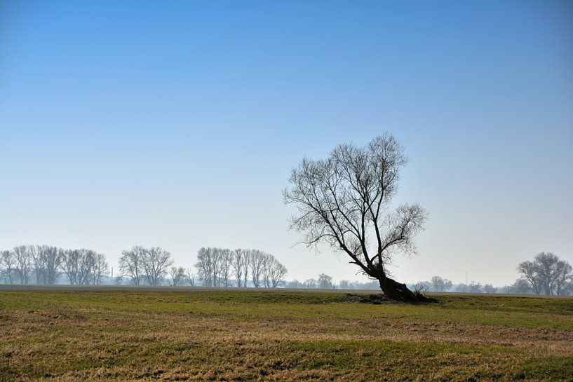 Arbre dans une prairie sur Heiko Kueverling