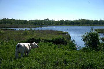 Zouweboezem von Merijn Loch