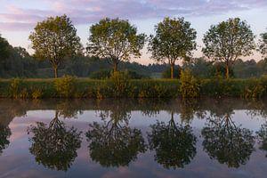 Bäume von Marinella Geerts