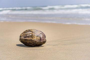 Eenzame kokosnoot van Joost Potma