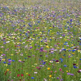 Wilde bloemenveld met voornamelijk paarse en blauwe tinten van JM de Jong-Jansen