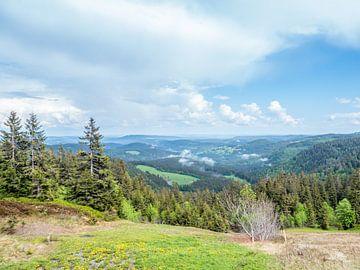 Panoramisch uitzicht over het Zwarte Woud van Animaflora PicsStock