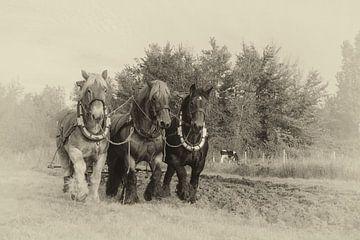 Ploegen met Trekpaarden van