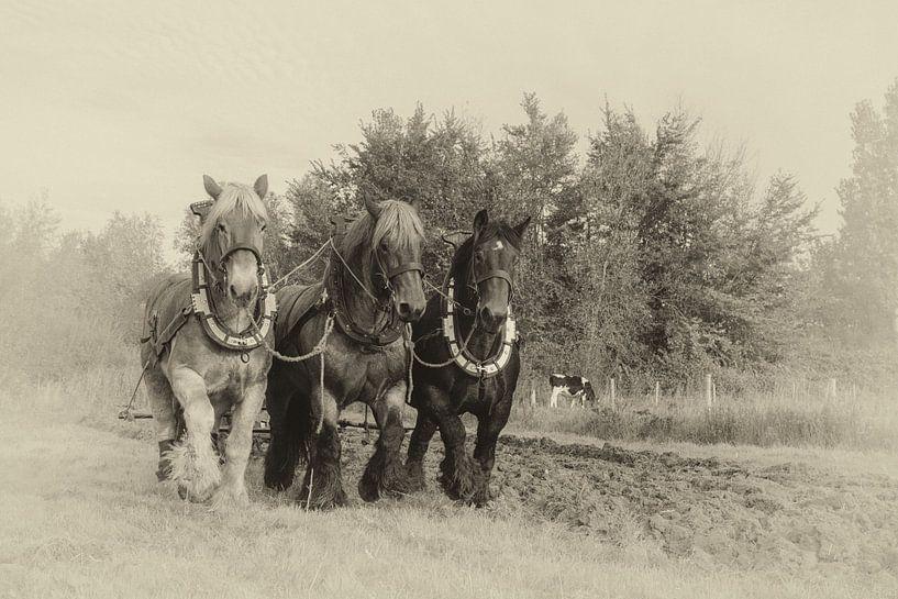 Ploegen met Trekpaarden van Bram van Broekhoven
