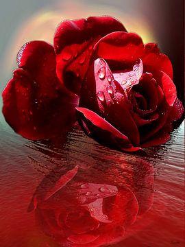 rose rouge sur Gertrud Scheffler
