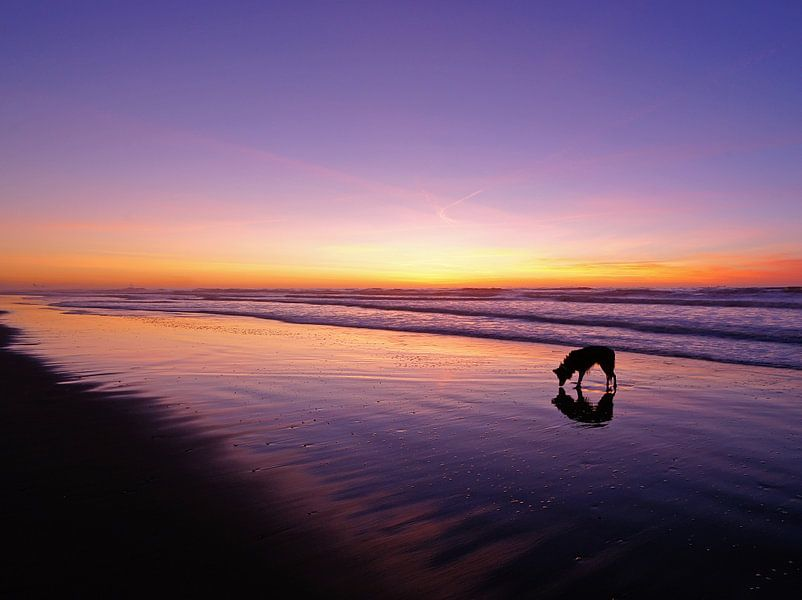 dog standing in the sea van Dirk van Egmond