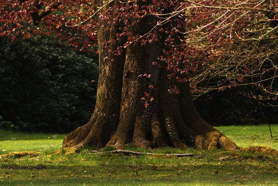 Reuzenboom van sandra ten wolde