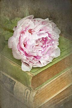 vintage roos op een stapeltje van oude boeken sur Marga Goudsbloem