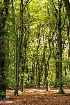 Bos aan het begin van de herfst. von Fred Fiets