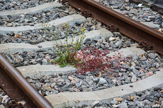 Treinrails met 2 gekleurde kleine plantjes van ProPhoto Pictures