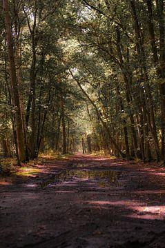 Bomen pad in het bos van Hilversum van Leon Schijf