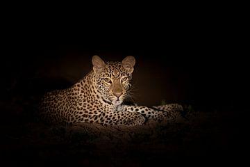 Leopard in der Nacht von Anja Brouwer Fotografie