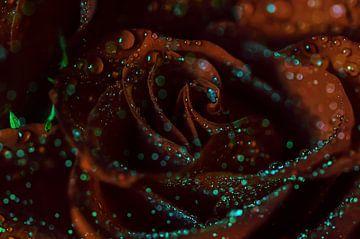 Blütenleuchten van zwergl 0611