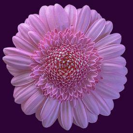 Flower power van Foto Amsterdam / Peter Bartelings