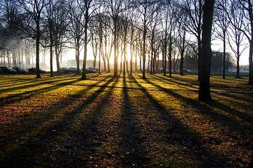 Zonsondergang  tussen de bomen van