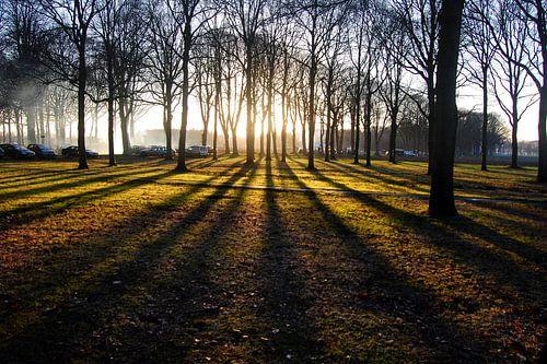Zonsondergang  tussen de bomen